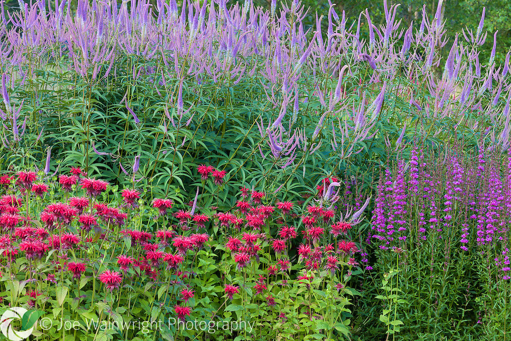 A colourful herbaceous border at Trentham Gardens, Staffordshire