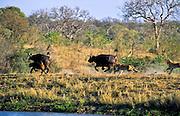 Battle at Kruger No. 3