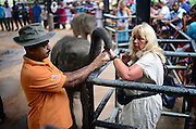 Tourists feed the baby elephants for a tip during feeding time at Pinnawala Elephant Orphanage in Sabaragamuwa Province of Sri Lanka. <br /> <br /> For the conscious visitor, a strange and uncomfortable feeling arises during the visit, as it can be easily mistaken with a zoo or a profitable business, which makes it hardly recommendable. <br /> <br /> Some animal welfare associations, such as Born Free, and elephant experts show strong disagreement with the management and request changes in the level of care, with concerns about chaining, transfers, breeding and the encouragement of visitors by the keepers to have direct contact with the animals, mainly motivated by the exchange of tips and not always positive for the elephant&yen;s wellbeing.