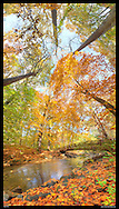 Panoramic Photograph of Sligo Creek Park, Takoma Park, MD.  Print Size (in inches): 8x15; 13x24; 20x36 48x27; 34x60; 41x72