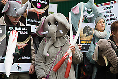 2017-02-06 Protest demands UK MPs vote to ban ivory trade