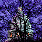 Winter twilight tree silhouetted against the Capitol Building, Washington, DC