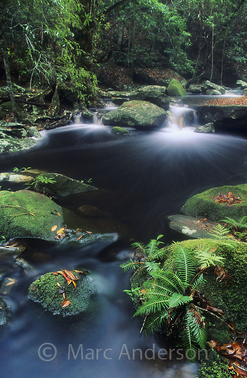 Beautiful flowing rainforest creek, Royal National Park, Australia.