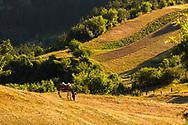 Fields above Gyovren village
