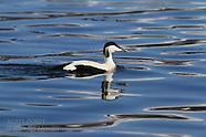 06: TROMSO BIRDS