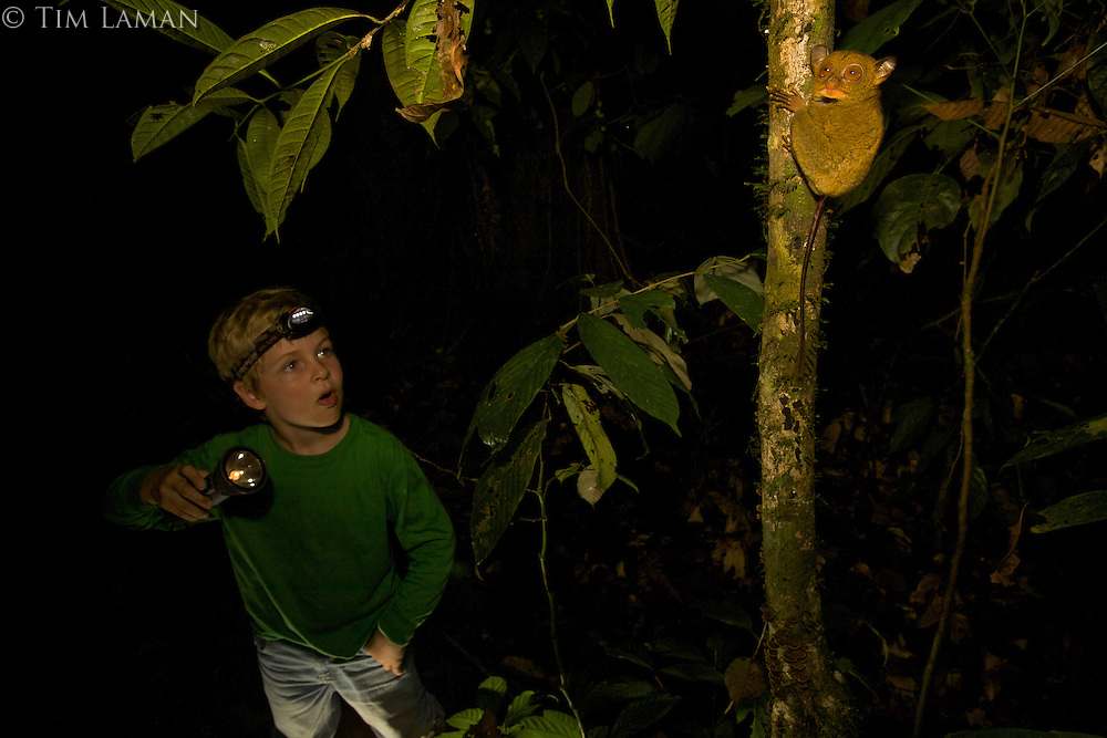 Seven year old boy (Russell Laman) looks at a wild Western Tarsier in the rain forest at night.  Also called Horsfield's Tarsier.  .Danum Valley Conservation Area, Borneo, Sabah, Malaysia