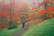 Jogger on Wildwood Trail with trees in Fall color; Hoyt Arboretum, Washington Park, Portland, Oregon.