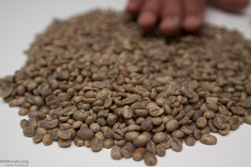 Unroasted coffee beans. COCASAM, San Marcos de Colón, Choluteca, Honduras. July 30, 2013.