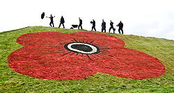 To mark the 2011 Scottish Poppy Appeal, which celebrates its 90th anniversary this November, ground staff from sports stadiums Hampden and Murrayfield put their differences aside to paint giant poppies on the famous grass pyramids on the M8 motorway..Pic © Michael Schofield.