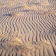 Great Sand Dunes, natural grass, Colorado