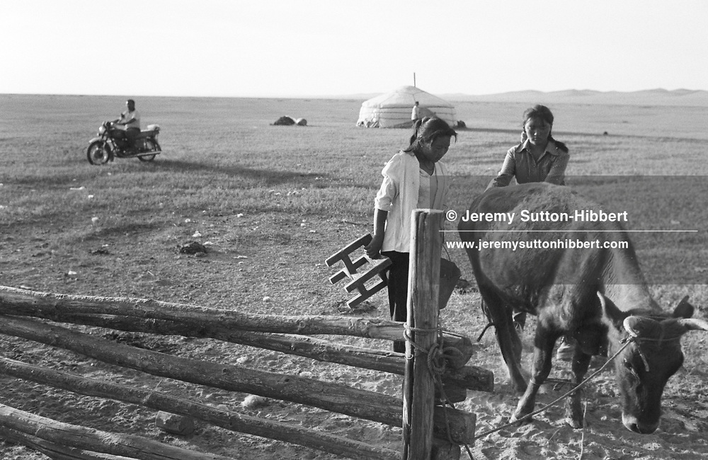 Two young nomadic girls milk their cows at dawn as the first of their many daily chores, on the steppes. The Mongolian steppe.