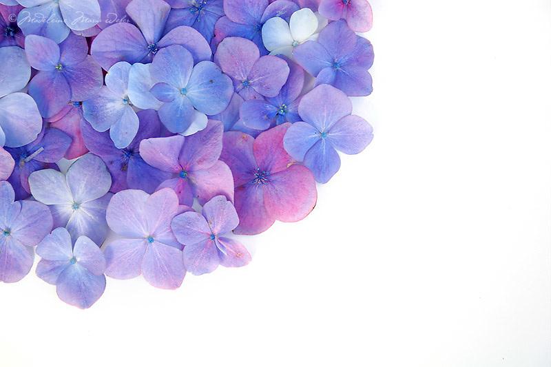 irish flowers / fa010