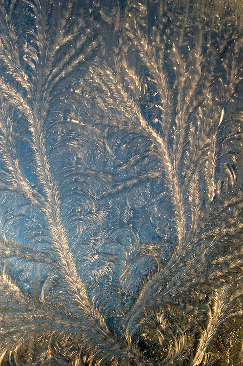 Feathers of delicate ice grow on glass.
