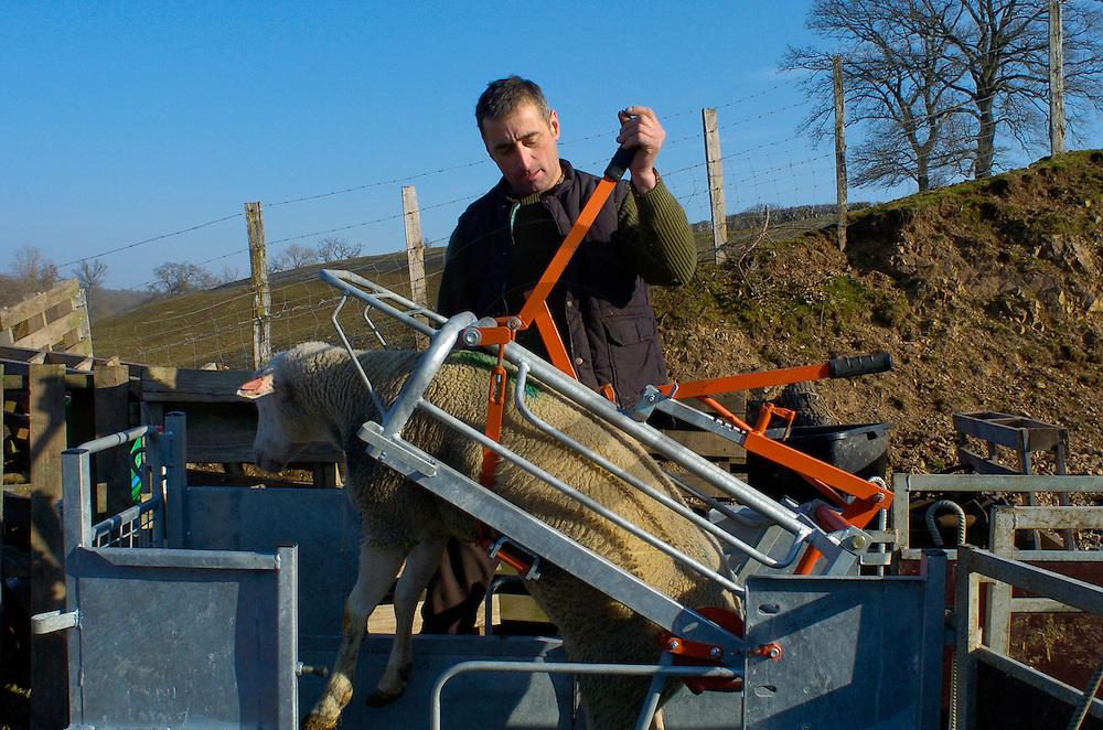 15/03/05 - JOUEY - COTE D OR - FRANCE -  Cage de retournement mobile permettant differentes manipulations sur les ovins.  Michel LEMOINE - Photo Jerome CHABANNE
