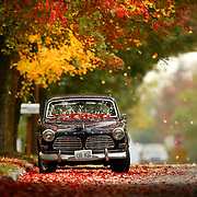 LEAVES CLO.A car is covered with blowing leaves on 5th Avenue NE north of 145th on Wednesday, October 12, 2005.  Palettes of color are splashed across the region as deciduous trees shed their leaves in burst of color.  Photo by Joshua Trujillo / Seattle Post-Intelligencer