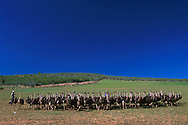 Ostrich Farm.South Africa