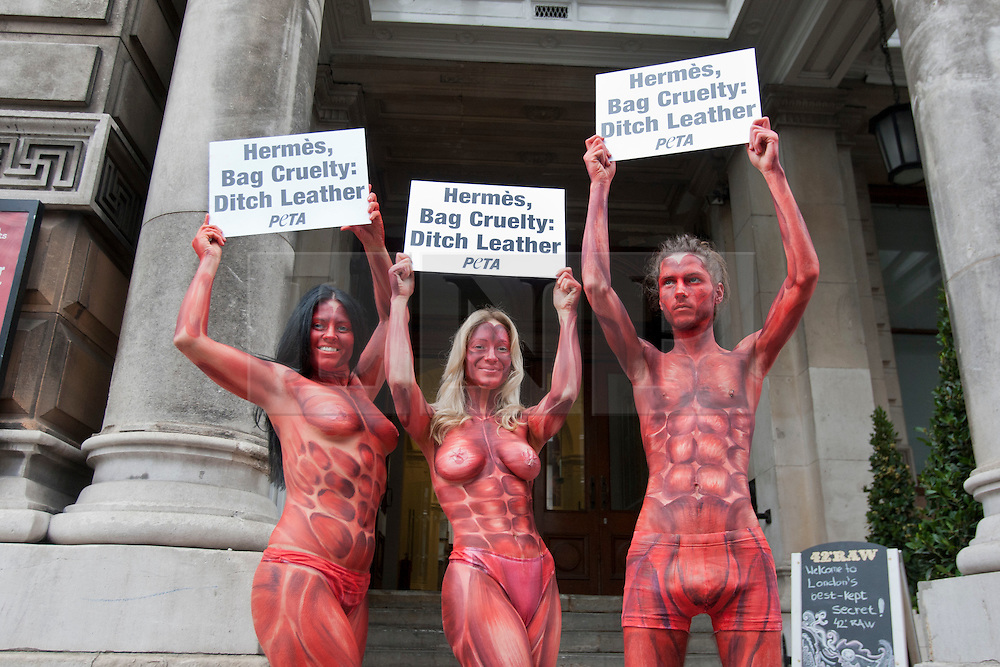 protester topless peta protest