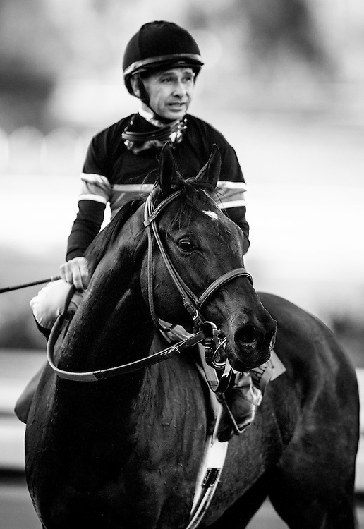 December 26 2014: Shared Belief and Mike Smith win the Malibu Stakes at Santa Anita Park in Arcadia CA. Alex Evers/ESW/CSM