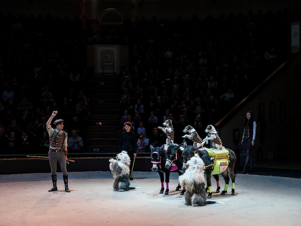 "A performer with trained dogs and donkeys at the Belarus State Circus during a show called ""Africa!?!"" on Wednesday, November 25, 2015 in Minsk, Belarus."
