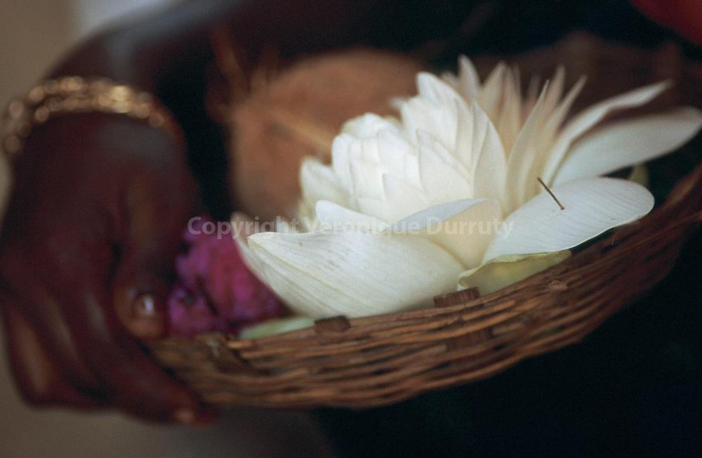 """Livre """"Parfums de l'Inde"""", p.141...Jeune femme portant un panier d'offrandes : fleur de lotus, rose, noix de coco...Livre """"Parfums de l'Inde"""", p.141...Jeune femme portant un panier d'offrandes : fleur de lotus, rose, noix de coco."""