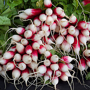 .Radishes for sale at the farmers market. .The Dane County Farmers Market is held Saturday mornings from early April through early November on the Capitol Square in Madison, Wisconsin.