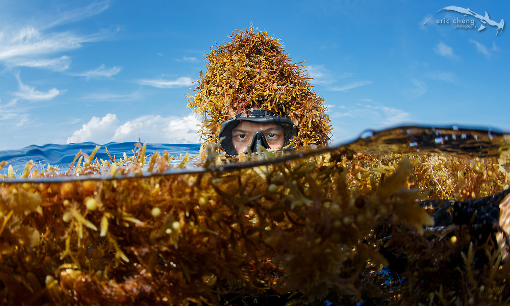 Self portrait (selfie) by Eric Cheng covered in kelp while trying to sneak up on whale sharks in Mexico.