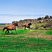 """The wild horses of Rapa Nui and their horsemen, """"los jorgos"""". Mass tourism and ancient traditions trying to exist together in peace."""