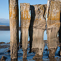 WA10074-00...WASHINGTON - Remains of an old structure along the shores of Padilla Bay.