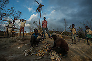 LACADONIE, HAITI - OCTOBER 10, 2016: Lithome Saint-Mesyeux, (third from right) plucks dried corn kernels from its dried brown sheathing with his son. The busy work of staving off starvation ocupies his family.  Hurricane Matthew destroyed homes and crops in this remote village in the mountains. Families scour for crops spared by the storm and scavenge the hillsides for plantains and beans not yet turned. Neighbors have come to one another's aid, sharing food and resources, the valor of a tight-knit community where the missing are known by name.  PHOTO: Meridith Kohut for The New York Times