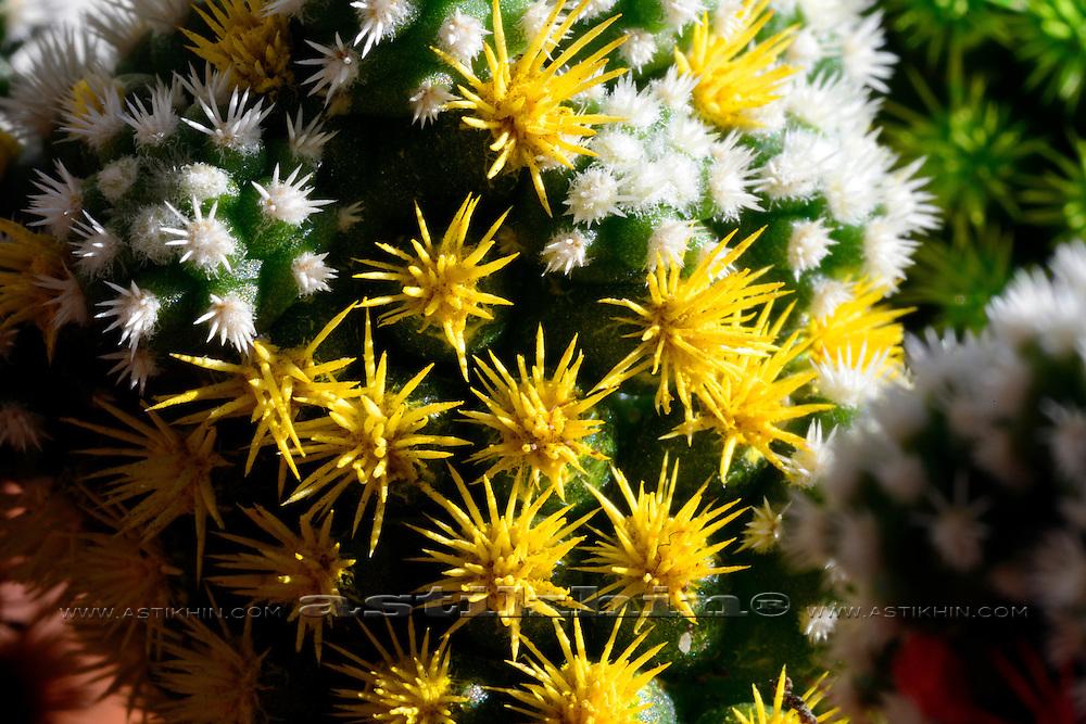 Macro image of a cactus.
