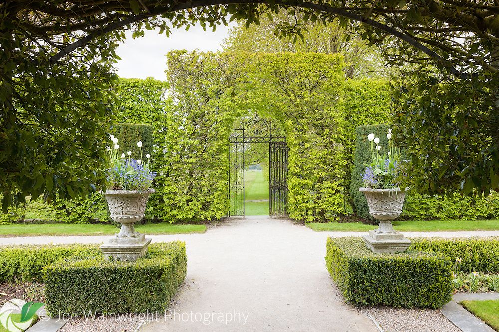 An ornate, wrought iron gate leads from the garden at Holker Hall, towards the wildflower meadow and sundial. The urns are planted with tulips and forget-me-nots. Photographed in May