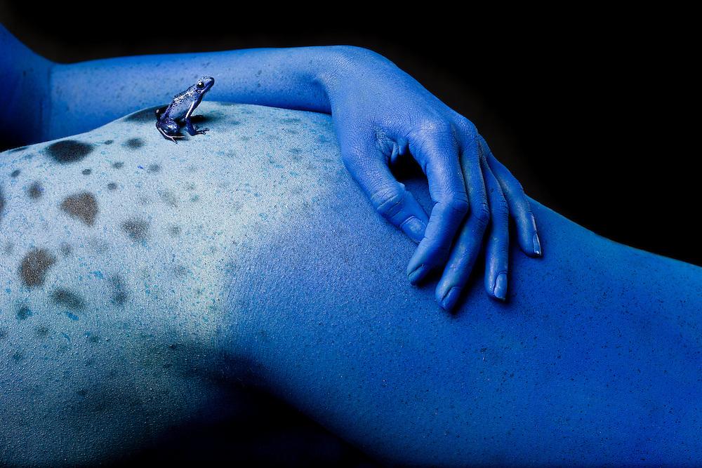 First Place FotoWeek DC 2012, Natural World Portfolio. Metamorphosis. Blue poison dart frog