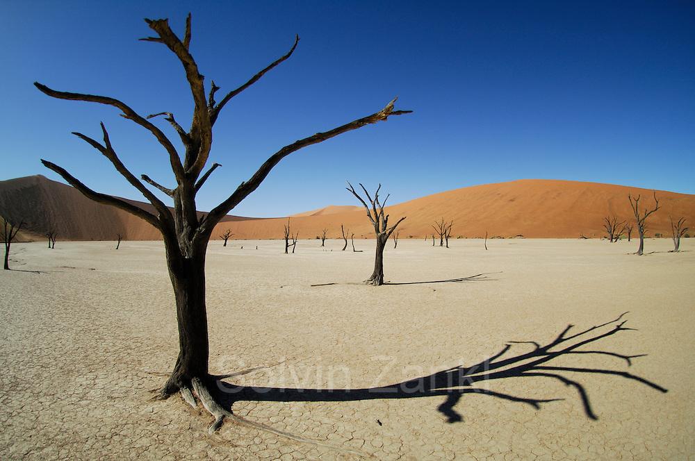 Zwischen den roten Sanddünen des Sossusvlei liegt die berühmte Salzpfanne Deadvlei mit ihren 5000 Jahre alten, abgestorbenen Baumskeletten. |Sesriem Sossusvlei sand dune. Deadvlei. Dried up salt pan and 5000 year old tree stumps