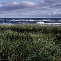Tall grass along a beach on Canada's Prince Edward Island