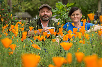 """Coffee Roaster J. Kirk Feiereisen and Actor/body worker, Jen Grigg, sit  among their recent crop of California Poppies in the front yard of their Calistoga home.  """"Each of us had been divorced for about two weeks when we met at the Hydro three years ago...we've been friends since and """"platonic"""" roommates just recently.""""  """"Three years ago this yard was waist deep in weeds.  Last year I put in the wood chips and this year poppies.""""  -J.Kirk Feiereisen"""