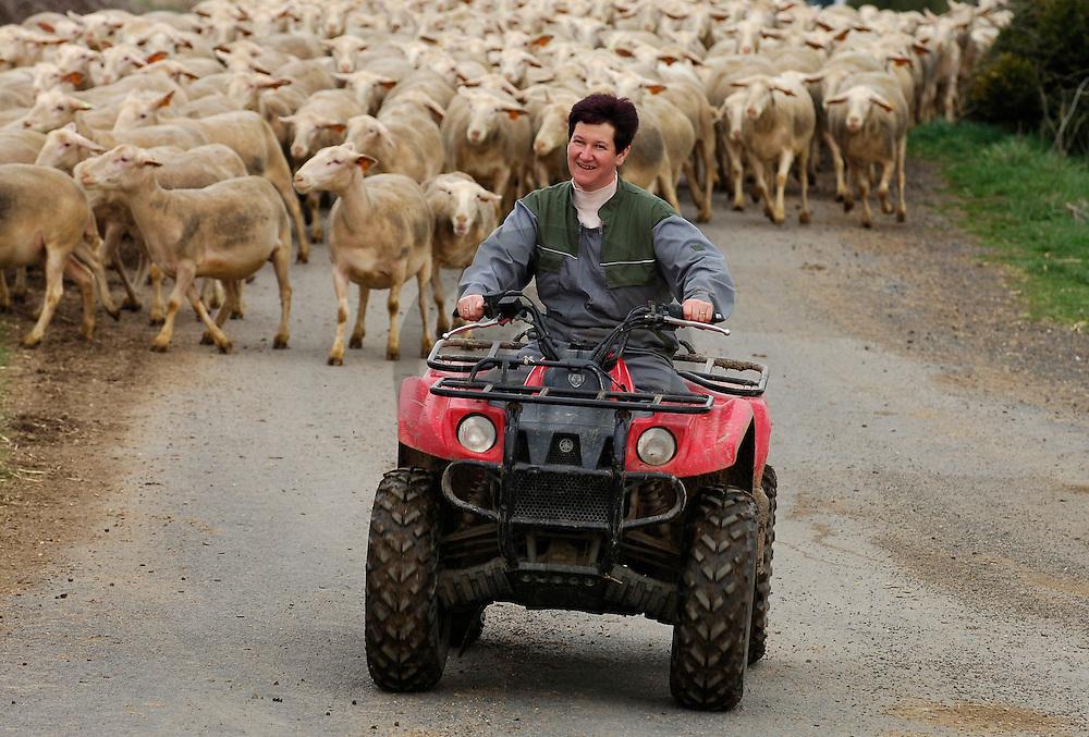30/03/06 - VERNEUGES - HAUTE LOIRE - FRANCE - Elevage de brebis BMC d Isabelle LUBIERE. Manipulation du troupeau avec un quad - Photo Jerome CHABANNE