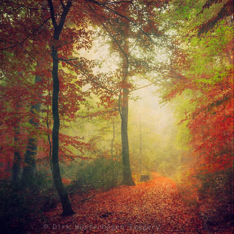Colourful path through a foggy autumn forest. Texturized photograph<br /> <br /> Prints: http://society6.com/DirkWuestenhagenImagery/Fall-Forest-Mood_Print#1=45