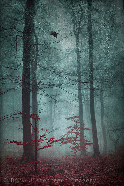 Two small trees with red leaves in a misty late autumn forest . tetured photograph.<br /> RedBubble products: http://www.redbubble.com/people/dyrkwyst/works/20698839-here-comes-the-fear<br /> <br /> Society6 products: https://society6.com/product/here-comes-the-fear_print#1=45