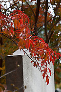 Fall in the Congressional Cemetery.