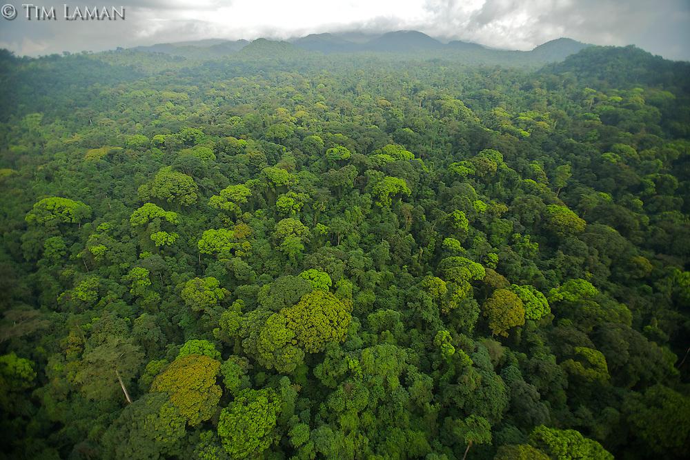 Aerial view of rain forest canopy.  South coast region of Bioko Island, Equatorial Guinea, West Africa.