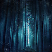 Abstract eerie forest scenery in deep blue tones<br /> Prints &amp; more:<br /> https://society6.com/product/worse-dream_print#1=45<br /> <br /> or<br /> <br /> http://www.redbubble.com/people/dyrkwyst/works/16692893-worse-dream