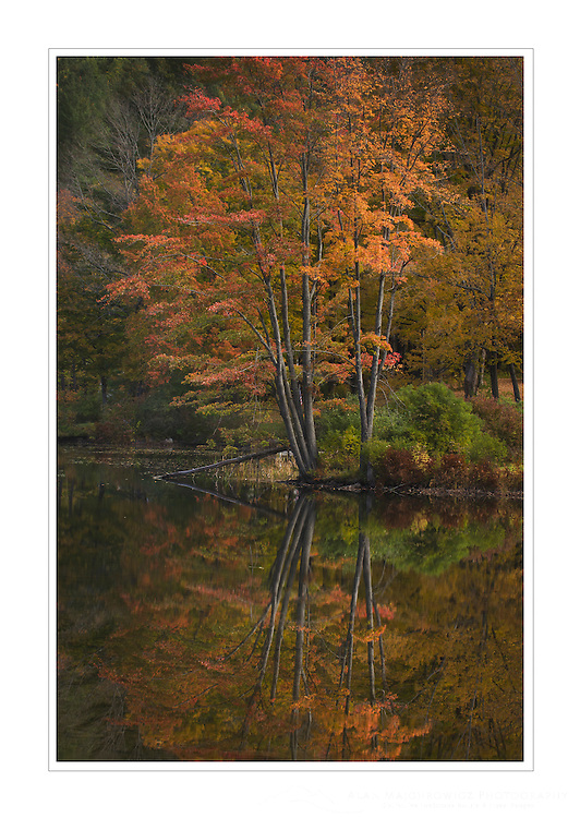 Fall foliage reflected in Lake Pauline, Vermont