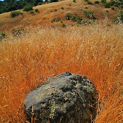 Rock in a field, Monte Bello Open Space Preserve, Palo Alto, California