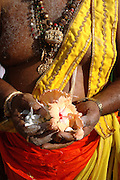 Priest with hand full of hibiscus flowers. At Nallur annual chariot festival.