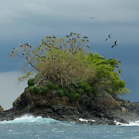 Island with roosting frigatebirds.<br />
