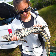 Michelle McEachern works for the U.S. Geological Survey (USGS) as part of a team of scientists tracking invasive giant tegu lizards and Burmese pythons that are threatening the balance of nature in the Florida Keys and Everglades.
