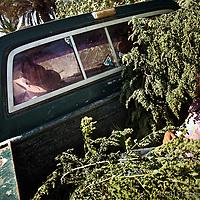 Isabel y su abuelo regresan de la huerta en el rancho Palo Verde, llevando pastura para los borregos.