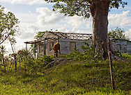 House and horse in the Puerto Prieta area, Pinar del Rio, Cuba.