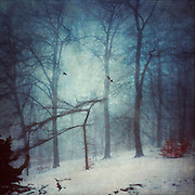 Misty winter day in a park - texturized and manipulated photograph<br /> <br /> Prints &amp; other products:<br /> http://society6.com/product/faint-forest_print#1=45