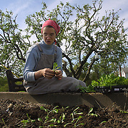 Sister Grace Remington plants young vegetable seedlings in the garden at Our Lady of the Mississippi Abbey near Dubuque, Ia.  The order raises its own food and has a certified organic farm.   Crops of wheat, oats, soybeans and corn are sold which help financially sustain  their community   The 22 Roman Catholic nuns follow Jesus Christ through a life of prayer, silence, simplicity and ordinary work.  Their home is a beautiful monastery which sits high on a bluff, overlooking the Mississippi River.